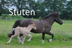 Stuten